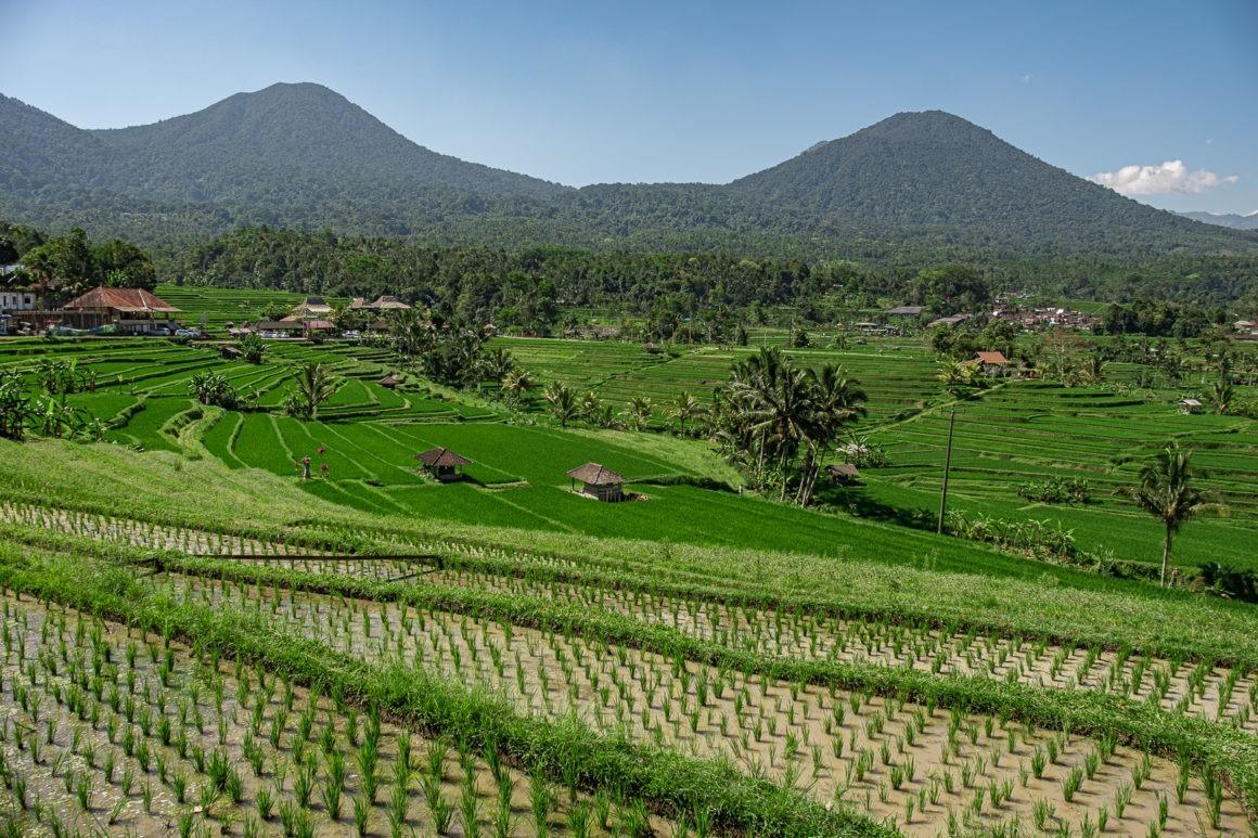Les rizières de Jatiluwih font partie des plus belles rizières de Bali