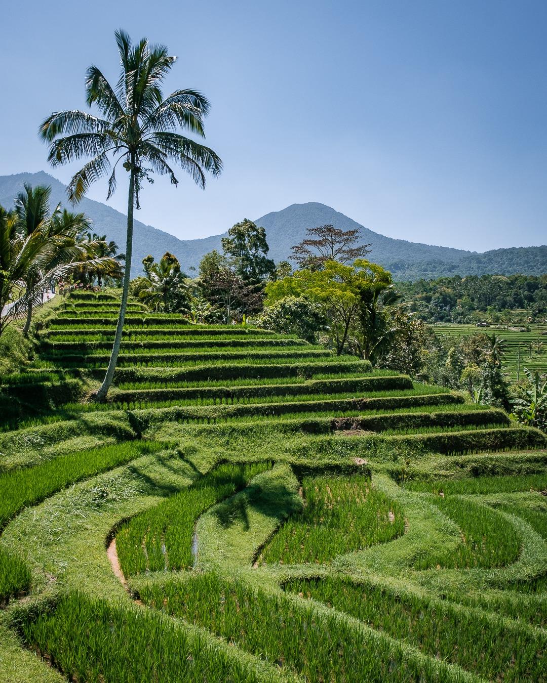 Les rizières de Jatiluwih à Bali sont inscrites au patrimoine mondial de l'Unesco