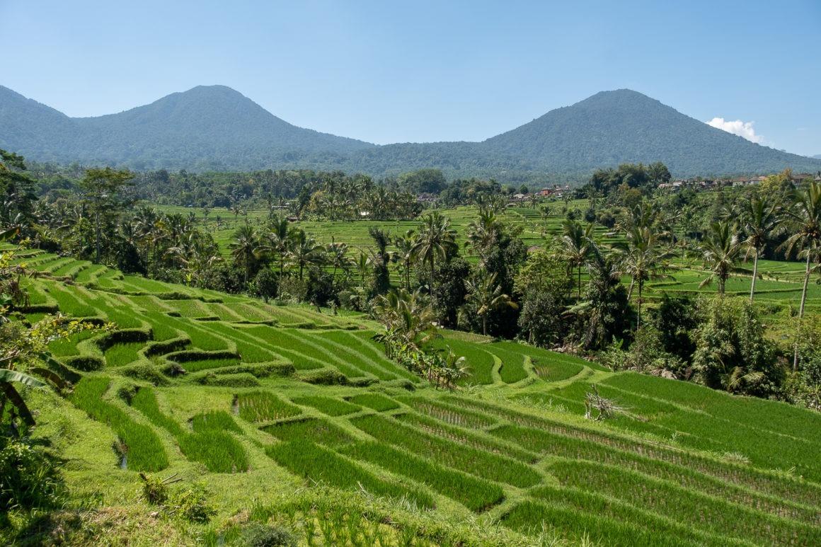 A Jatiluwih on se promène autour de rizières à perte de vue
