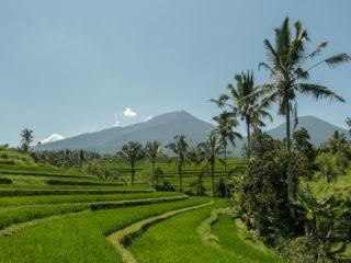 Les rizières de Jatiluwih en Indonésie
