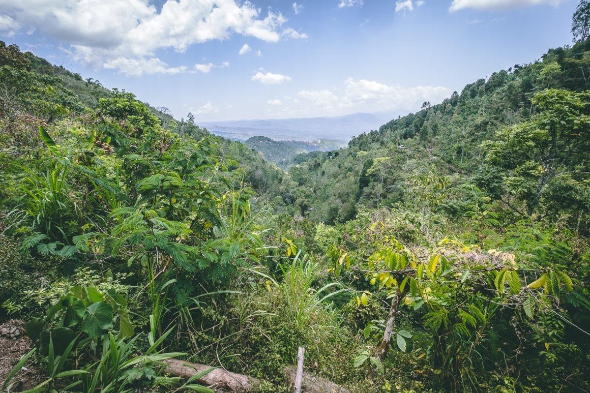 Les sentiers de randonnée à Munduk offrent une véritable immersion dans la jungle tropicale