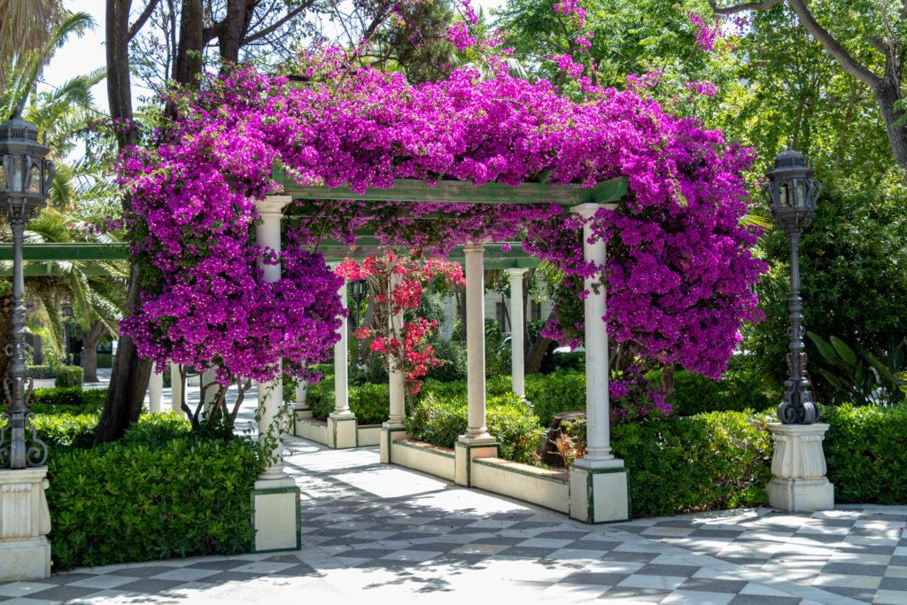 Les fleurs du parc Alameda Apodaca
