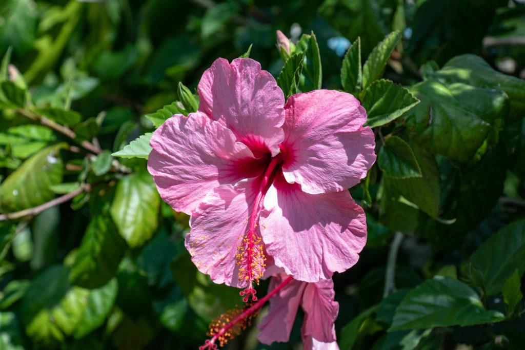 Fleur du parc Alameda Apodaca