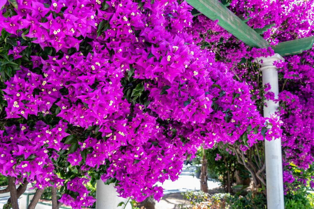 Le parc Alameda Apodaca et ses fleurs