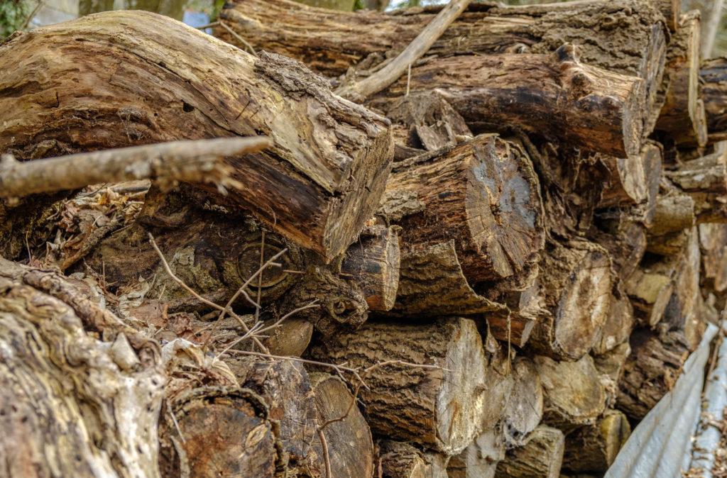 Troncs d'arbre Salève