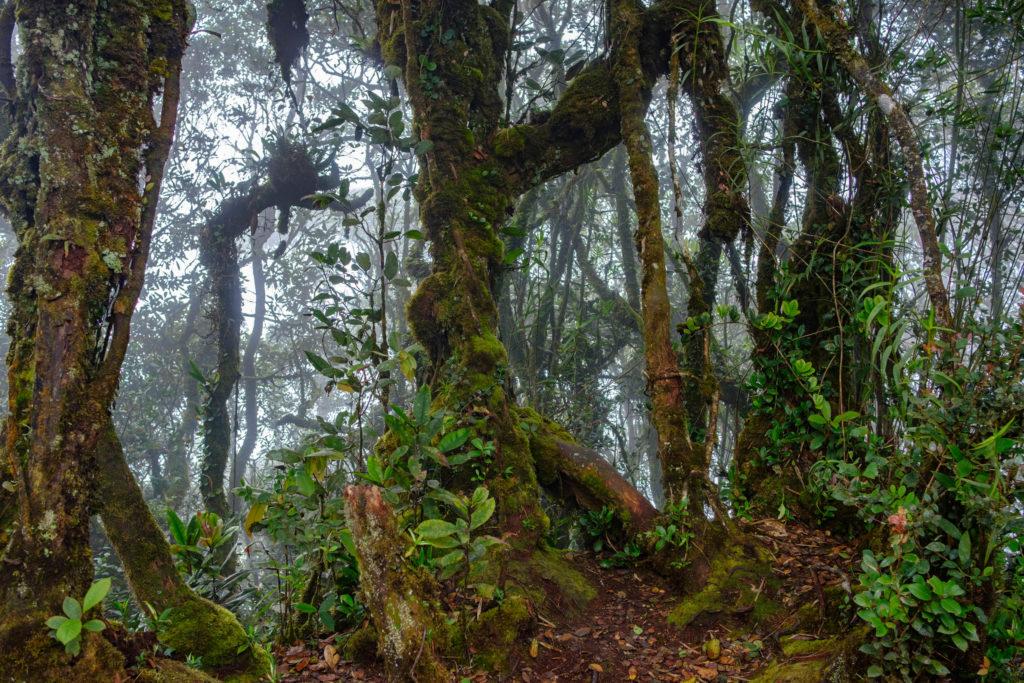 La Mossy Forest en Malaisie