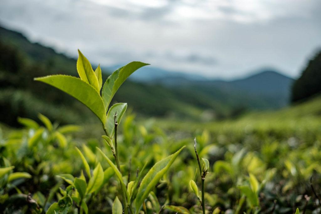 Résolutions écologiques à adopter - Vanema blog