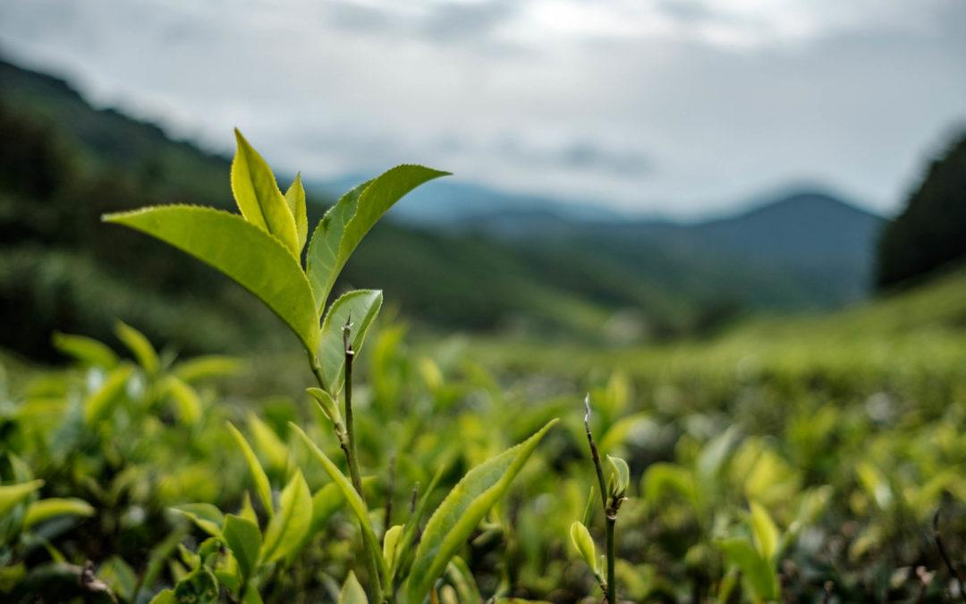 5 résolutions écologiques pour 2019