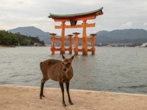 Torii flottant à Miyajima