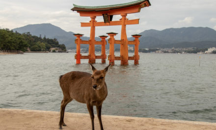 Une journée à Miyajima, l'île sacrée du Japon