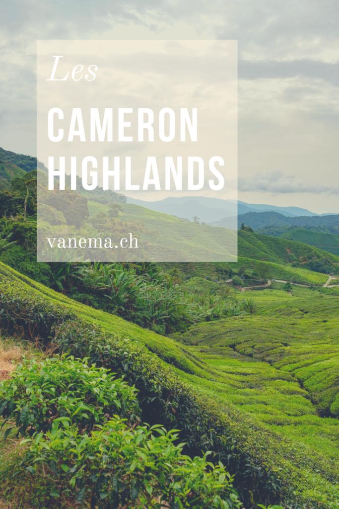 Les champs de thé aux Cameron Highlands en Malaisie