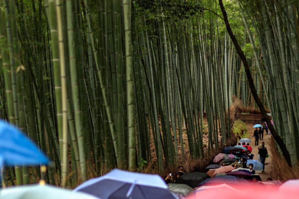 La bambouseraie d'Arashiyama fait partie des visites incontournables de Kyoto et du Japon.