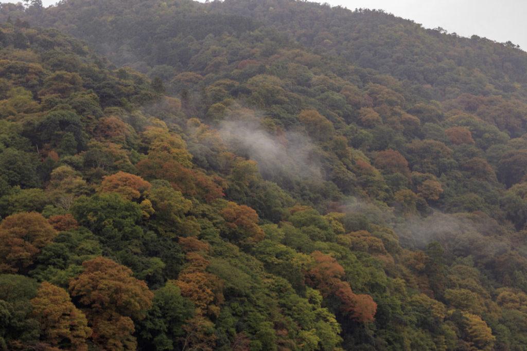 Le début de l'automne à Kyoto.