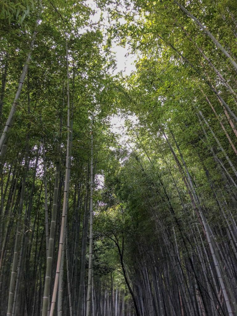 Bambous d'Arashiyama
