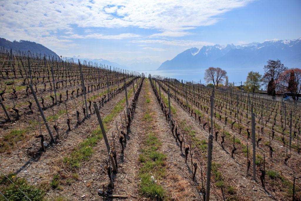 Les vignes de Lavaux