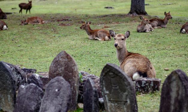 Voyage au Japon : une journée à Nara