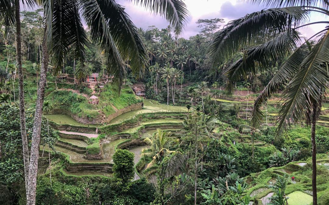 Notre itinéraire pour visiter l'Indonésie