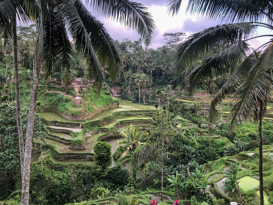 Tegalalang rice terrace Indonésie