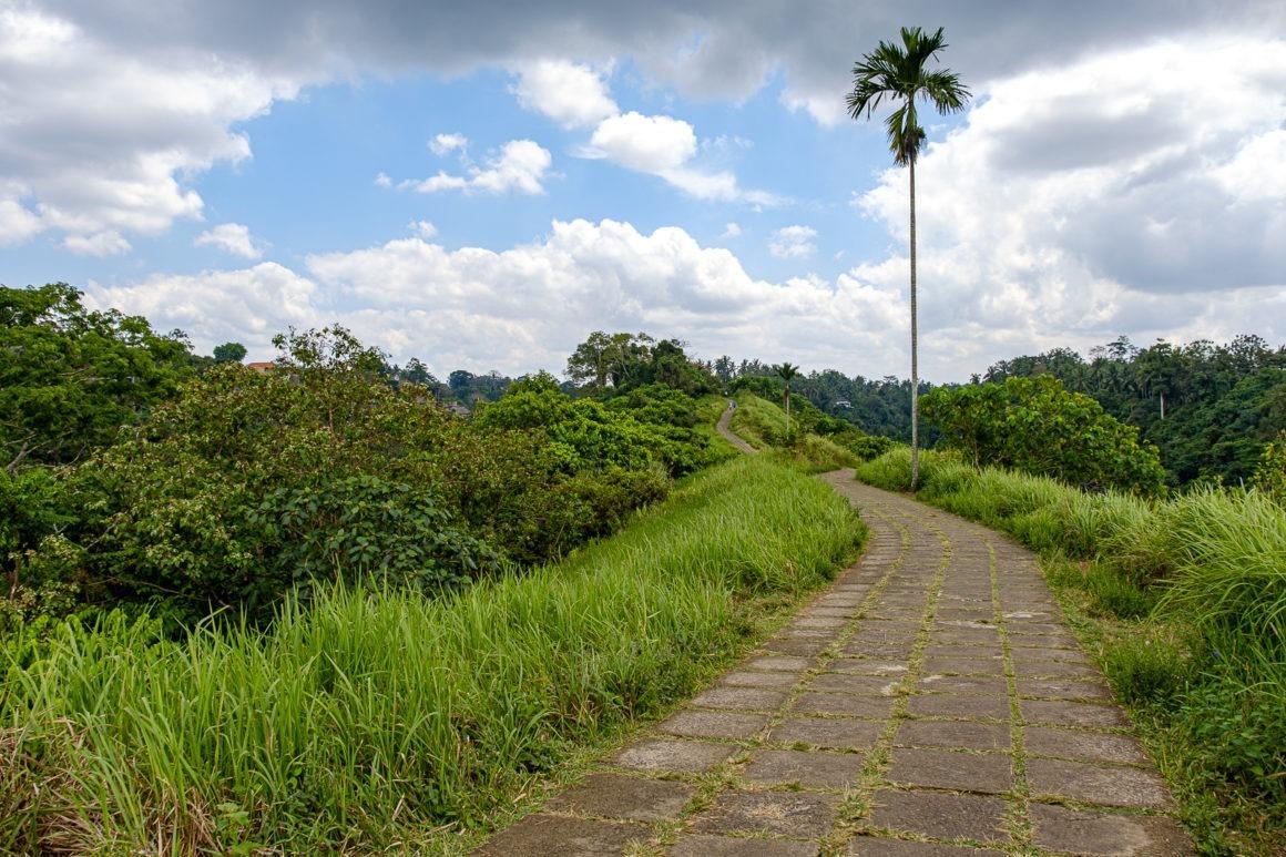 Campuhan Ridge Walk est une belle balade à faire à Ubud sur l'île de Bali