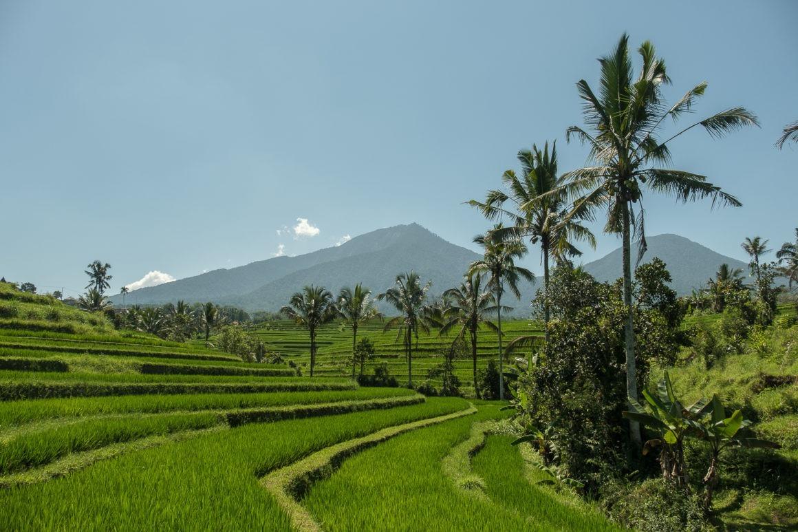 Les rizières de Jatiluwih font partie des plus belles de Bali.